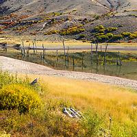 https://Duncan.co/dead-trees-in-gunnison-river