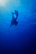 Scuba diver silhouette mid water on tropical Agincourt reef, Great Barrier Reef, Queensland, Australia.