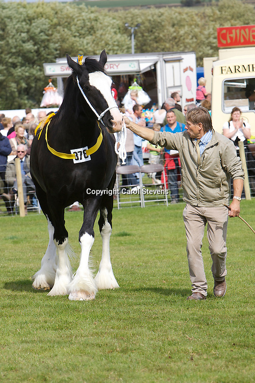 Heavy Horse classes at Penistone Show 2011<br /> Paul Bedford