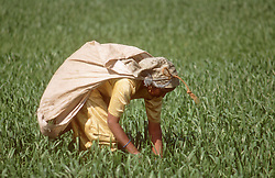 Female farmer working in field planting crops,