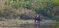 Tourists on an elephant safari, Bardiya National Park, Nepal