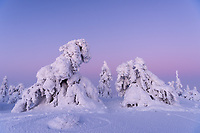 Schneefiguren im Riisitunturi Nationalpark in Lappland, Finnland