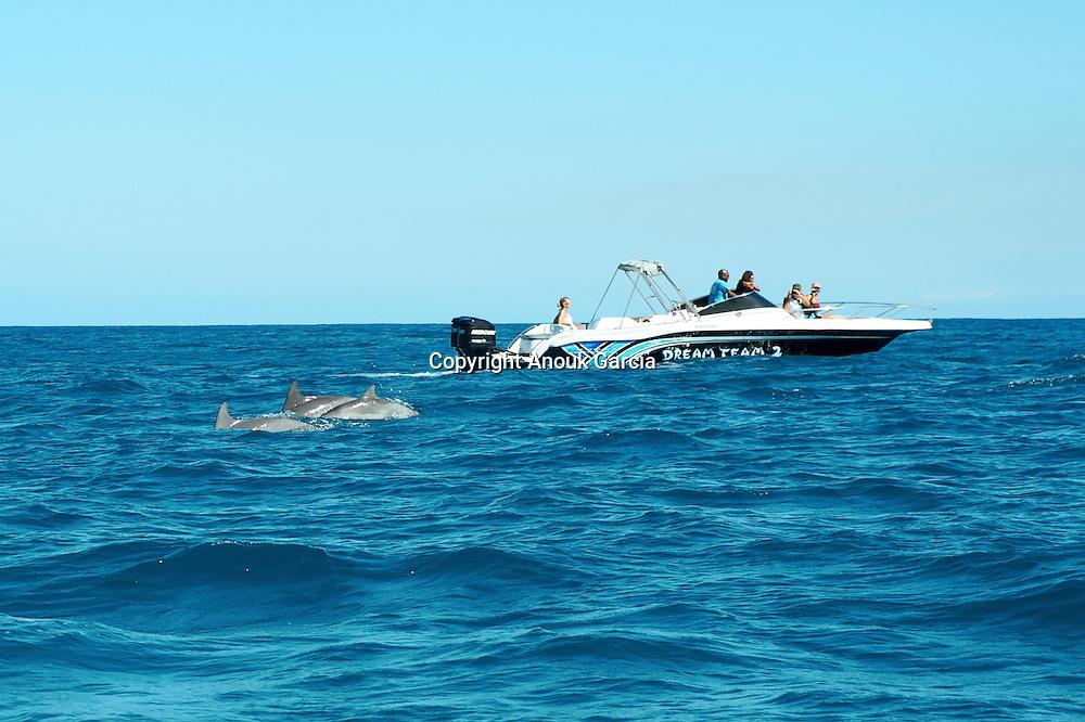 Meet with the dolphins blowers | Rencontre avec les dauphins souffleurs