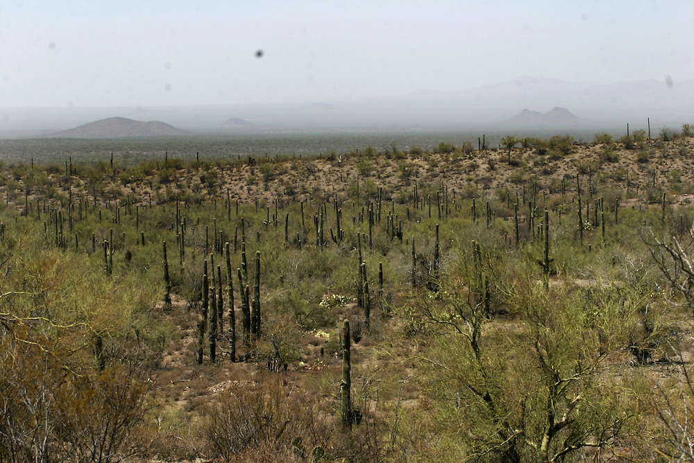 A view of the Arizona desert on July 16 2006. Thousands of undocumented immigrants try to cross this unforgiving landscape to gain illegal entrance into the United States and a chance for a better life.