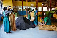 Sri Lanka, province du centre, Nuwara Eliya, plantations de thé de Ceylan, usine de thé, Bluefield tea Factory, emballage du thé // Sri Lanka, Ceylon, Central Province, Nuwara Eliya, tea plantation in the Highlands, Tea Estate Bluefield, packaging of tea