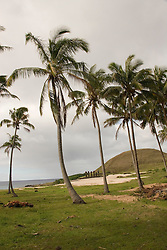 Chile, Easter Island: Anakena Beach, a white coral sand beach with palm trees and several restored moai or statues..Photo #: ch287-32739..Photo copyright Lee Foster www.fostertravel.com lee@fostertravel.com 510-549-2202
