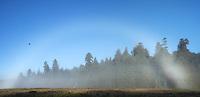 Panoramic Photo of Morning Fog Bow at Elk Prairie, Prairie Creek Redwoods State Park, California