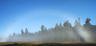 Panoramic Photo of Morning Fog Bow at Elk Prairie, Prairie Creek Redwoods State Park, California