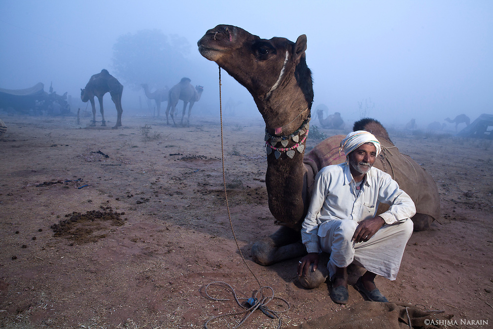 "Manzoor Khan has 2 camels. He only brought Badal to Nagaur fair for the camel dance competition. Badal has in the past won Rs11,000 at a competition in Bikaner, where they live. He has also worked in a  film in Mumbai, but Khan can not remember the name of it. He says his cakes ""kaam hai uchchalna aur koodna"", they are not working camels.<br /> (Photographed the day before holding up his leg)"