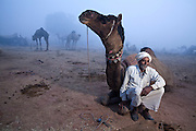 """Manzoor Khan has 2 camels. He only brought Badal to Nagaur fair for the camel dance competition. Badal has in the past won Rs11,000 at a competition in Bikaner, where they live. He has also worked in a  film in Mumbai, but Khan can not remember the name of it. He says his cakes """"kaam hai uchchalna aur koodna"""", they are not working camels.<br /> (Photographed the day before holding up his leg)"""