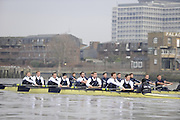 Putney, GREAT BRITAIN,    Foreground Bull, during the 2008 Varsity/Oxford University [OUBC] Trial Eights, raced over the championship course. Putney to Mortlake, on the River Thames. Thurs. 11.08.2008 [Mandatory Credit, Peter Spurrier/Intersport-images]..Crews - .Bull, Bow. Colin KEOGH, 2. Douglas BRUCE, 3.Michal PLOTOWIAK, 4. David HOPPER, 5. Aaron MARCOVY, 6. Ben HARRISON, 7. Sjoerd HAMBURGER, Stroke Colin SMITH and Cox Philip CLAUSEN-THUE...Bear, Bow. Tim FARQUHARSON, 2. Ben ROSENBERGER, 3. Mike VALLI. 4. Alex HEARNE, 6 Tom SOLESBURY, 7 George BRIDGEWATER, Stroke, Ante KUSURI and Cox Adam BARHAMAND. Varsity Boat Race, Rowing Course: River Thames, Championship course, Putney to Mortlake 4.25 Miles,