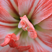 """Just Peachy""<br />