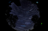 Star Trails looking Up (04:30-05:29). Composite of images  taken with a Nikon D850 camera and 8-15 mm fisheye lens (ISO 800, 10 mm, f/5.6, 30 sec)