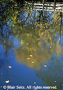 Wildwood Park, Harrisburg, PA, Pond Reflection, Hiking Trail