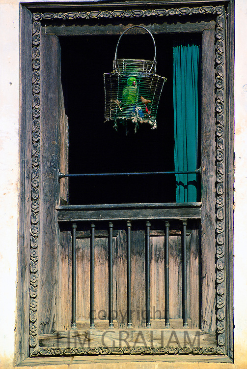 Caged parrot in window, Patan, Nepal. Avian flu (Bird flu virus) might affect caged birds.