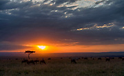 Sunrise over Maasai Mara, Kenya.
