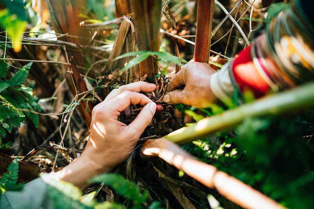 Trekking and foraging with Red Dao women in the mountains of northern Vietnam.