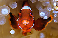 Underwater photos from Sulawesi, Indonesia