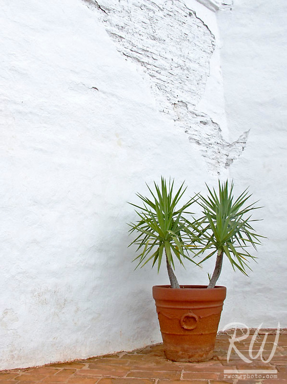 Potted Plant Against Mission Church Wall, San Diego Mission, California