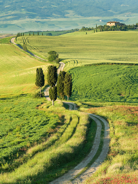 Road towards Terapile agriturismo near Pienza in Tuscany
