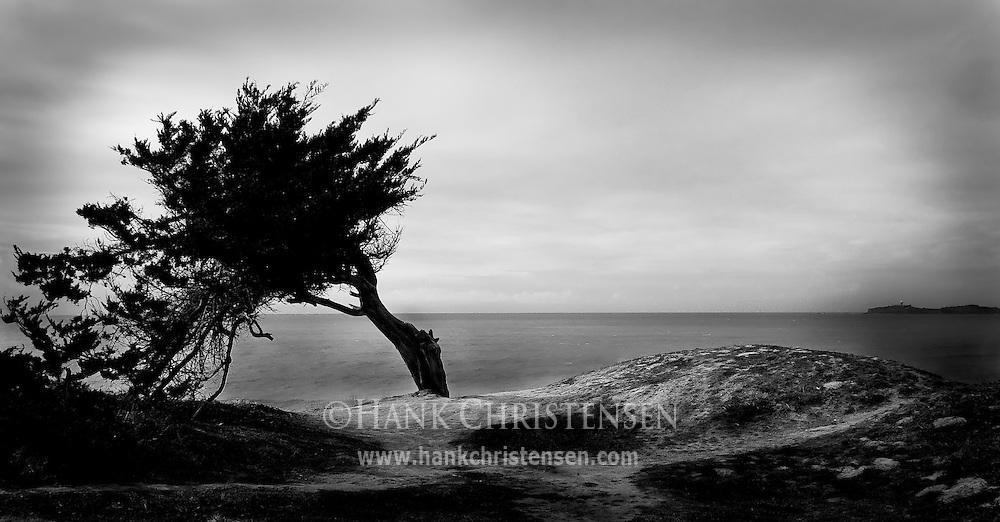 Tree and sea cliff, Half Moon Bay, CA