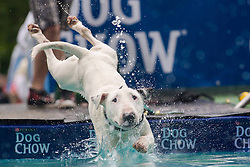 61539528<br /> A dog jumps into the water during a dog diving competition in Budapest, Hungary on May 18, 2014. Dog diving is free time sport testing the skill of the dogs. The owner throws a toy into the pool and the dog jumps into the water to retrieve it. Some dogs enjoy it, while some simply skip the task. Rules of the competition strictly forbid for the owners to toss the dogs into the water. It is a game the dog must enjoy and want to cooperate, Hungary, Sunday, 18th May 2014. Picture by  imago / i-Images<br /> UK ONLY