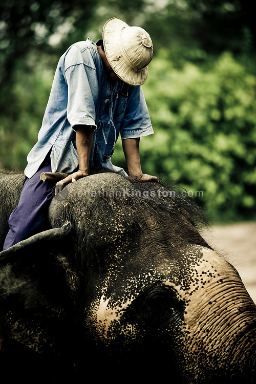 A mahout pauses to stretch his arms on top of his elephant while giving a demonstration of how asian elephants are used for logging and other heavy work to tourists visiting the Pattaya Elephant Village, Pattaya, Thailand.  The village was opened in 1973 as a sanctuary for former working elephants that can no longer be used for extended heavy work due to injury or ill health.  A popular tourist attraction, fee's paid by tourists support the upkeep of the elephants.