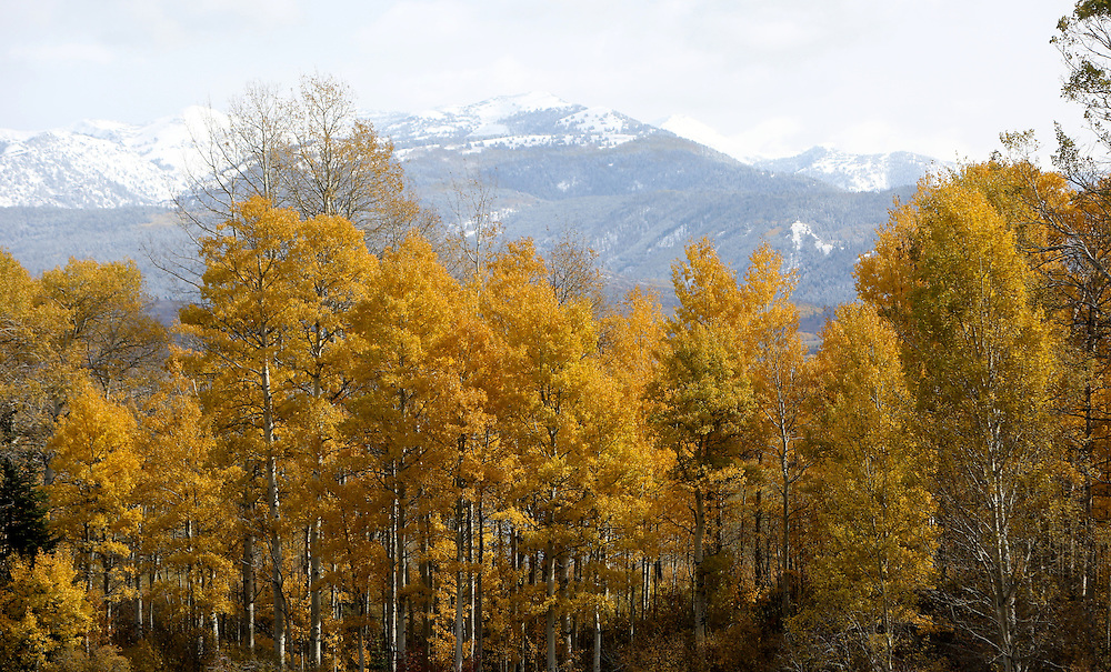 Fall colors in the Tetons.
