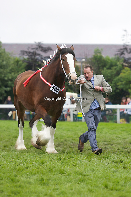 Mr L M Fountain's Bay Mare  f 2009  Woodhouse Bonny Jean<br />