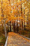 Leaf covered boardwalk on the nature trail at Blackwell Island Park, in Coeur D Alene, Idaho