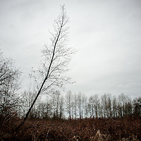 A moody landscape with on single leaning tree.
