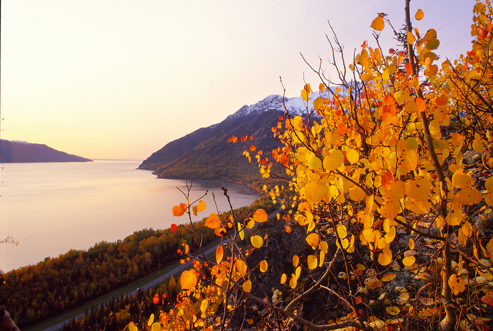 Alaska . Chugach Mts . , Bird Valley . Bird Ridge hike over the Seward Highway in autumn . Turnagain Arm .