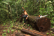 Amerindian Timber Harvest<br /> Mapari<br /> Rupununi<br /> GUYANA<br /> South America