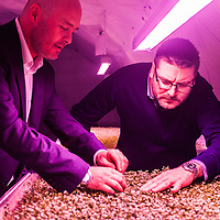 London, UK - 21 February 2014: Steven Dring (L) and Richard Ballard (R) check the crops at the Zero Carbon Food - Growing Underground tunnels in Clapham