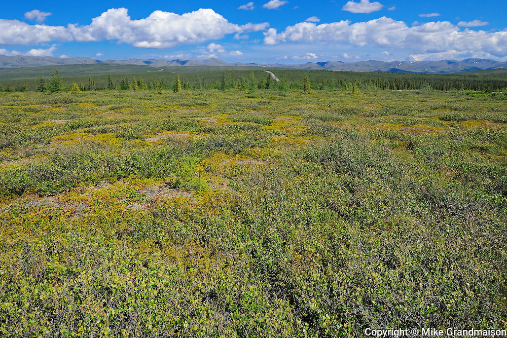 Tundra on the Dempster Highway  (KM 347 - 405) <br /> Dempster Highway<br /> Yukon<br /> Canada
