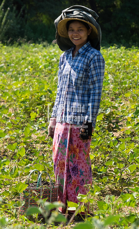A woman picking seeds in a field near Nyaung-U in Myanmar.