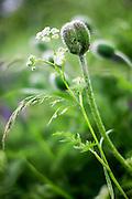 fresh spring green growth