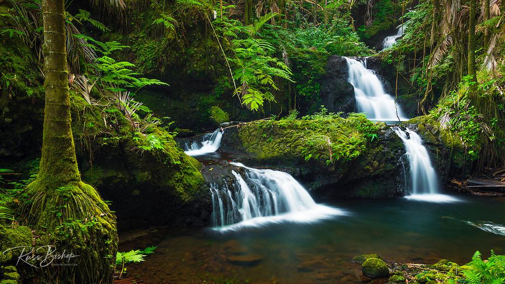Onomea Waterfalls, Hawaii Tropical Botanical Garden, Hamakua Coast, The Big Island, Hawaii