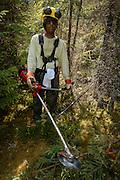 En pleine forêt québécoise, à 160 km au nord d'Alma, au Lac-Saint-Jean, dans le secteur du lac Froid, ce travailleur sylvicole d'origine africaine est en train d'éclaircir pour le reboisement.