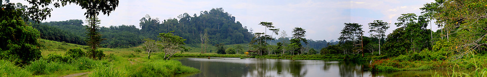 palm oil plantation<br /> borneo, malaysia