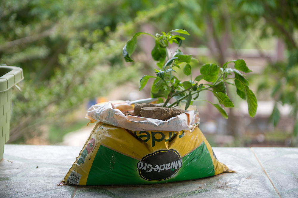A small tree grows out of a soil bag in Ganta Liberia