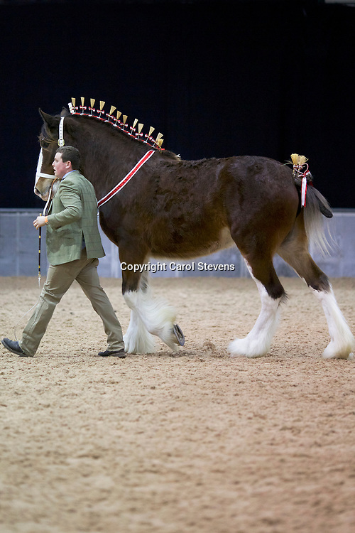 Mr Ben Wright's Old Croft Honeysuckle  (No.182)<br />