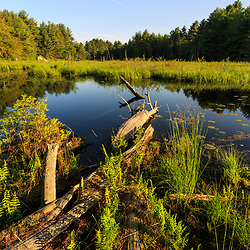 A beaver pond at the Harriman Farm in Durham, New Hampshire,