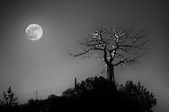 Moon on a snag tree near Martinsdale, Montana.