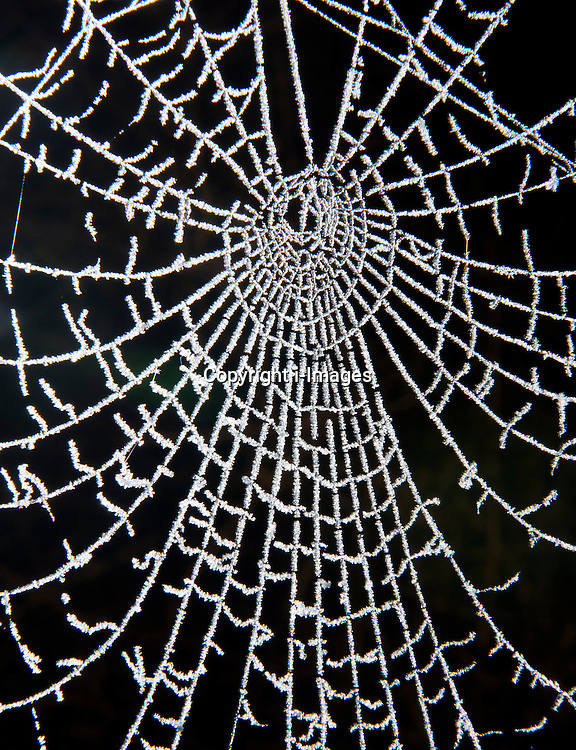 A frozen spiders web, London, UK, December 12, 2012. Photo by i-Images.