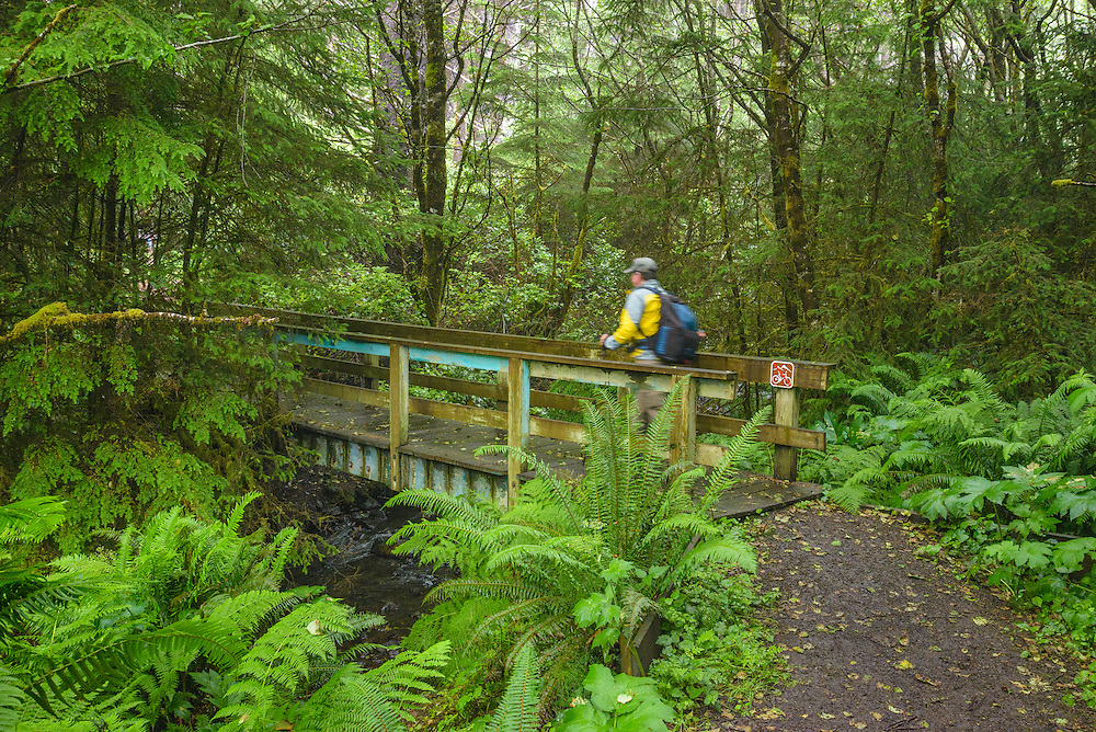 Oregon Coast Trail at Gwynne Creek near Cape Perpetua, Oregon Coast.