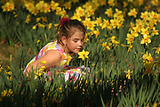 A young girl in the daffodil field of the Memphis Botanic Gardens.