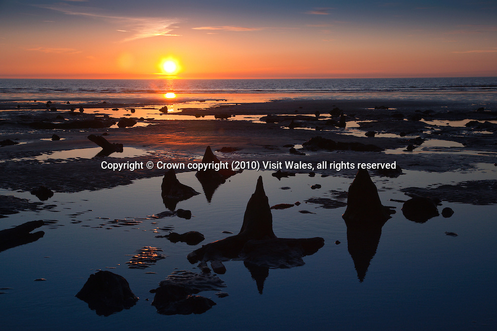 Tree stumps on beach at sunset<br /> Submerged forest<br /> Borth<br /> Ceredigion<br /> Mid Wales<br /> Coast<br /> Towns And Villages