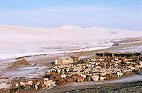 Mongolie. Province de Töv en hiver. Campement nomade. // Mongolia Töv province in winter. Nomadic camp.