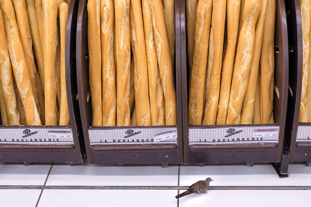 A bird looking for baguette crumbles inside a supermarket in Papeete. French traditional bread is baked daily throughout the islands.
